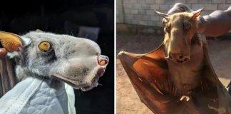 enorme murciélago