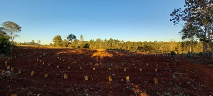 Ante la falta de lluvias, se recomienda monitorear y regar los plantines de yerba mate