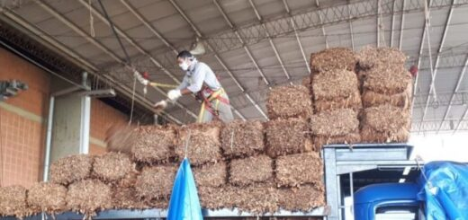 Tabaco: este sábado 19 estará depositado el retorno para más de 2.000 productores