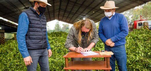 El IFAI entregó asistencia financiera a Cooperativa Agrícola en Andresito