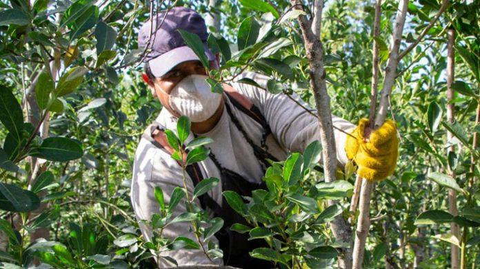 resolución del INYM que regula el cultivo