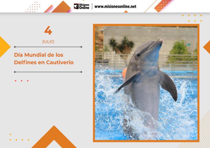Hoy se conmemora el Día Mundial de los Delfines en Cautiverio: ¿Cómo es la vida de esta especie en su propio hábitat?