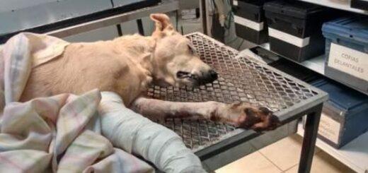 atacado por un pitbull en Posadas