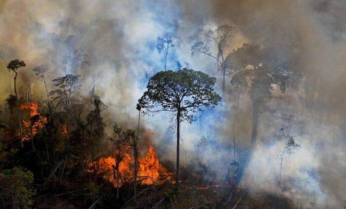 Cambio climático: ciertas regiones de la selva amazónica emiten más carbono del que absorben