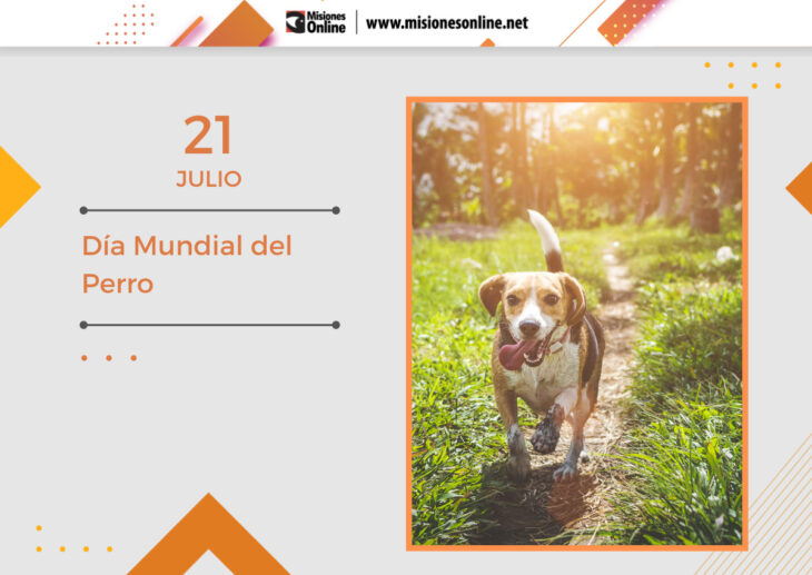 Hoy se celebra el Día Mundial del Perro: ¿Cuáles son los beneficios de adoptar un canino?