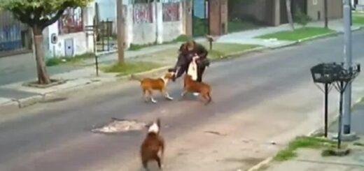 fue atacada por tres perros