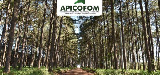El grupo APICOFOM recibió la Certificación Cadena de Custodia PEFC