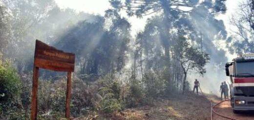 Tragedia ambiental en Misiones: incendios intencionales afectaron el Parque Provincial de la Araucaria que protege especies en peligro de extinción