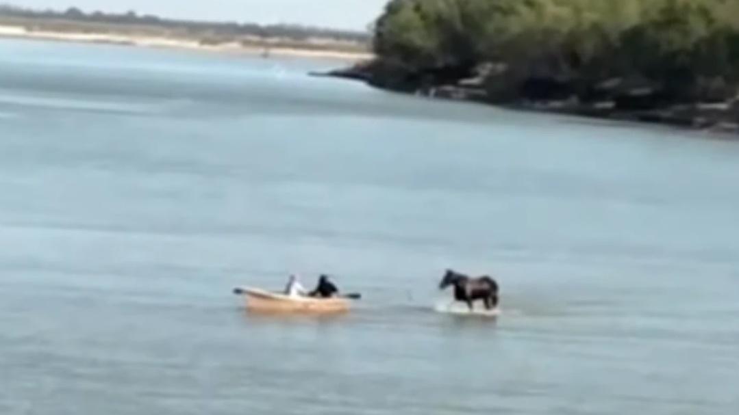 caballo caminando por el rio