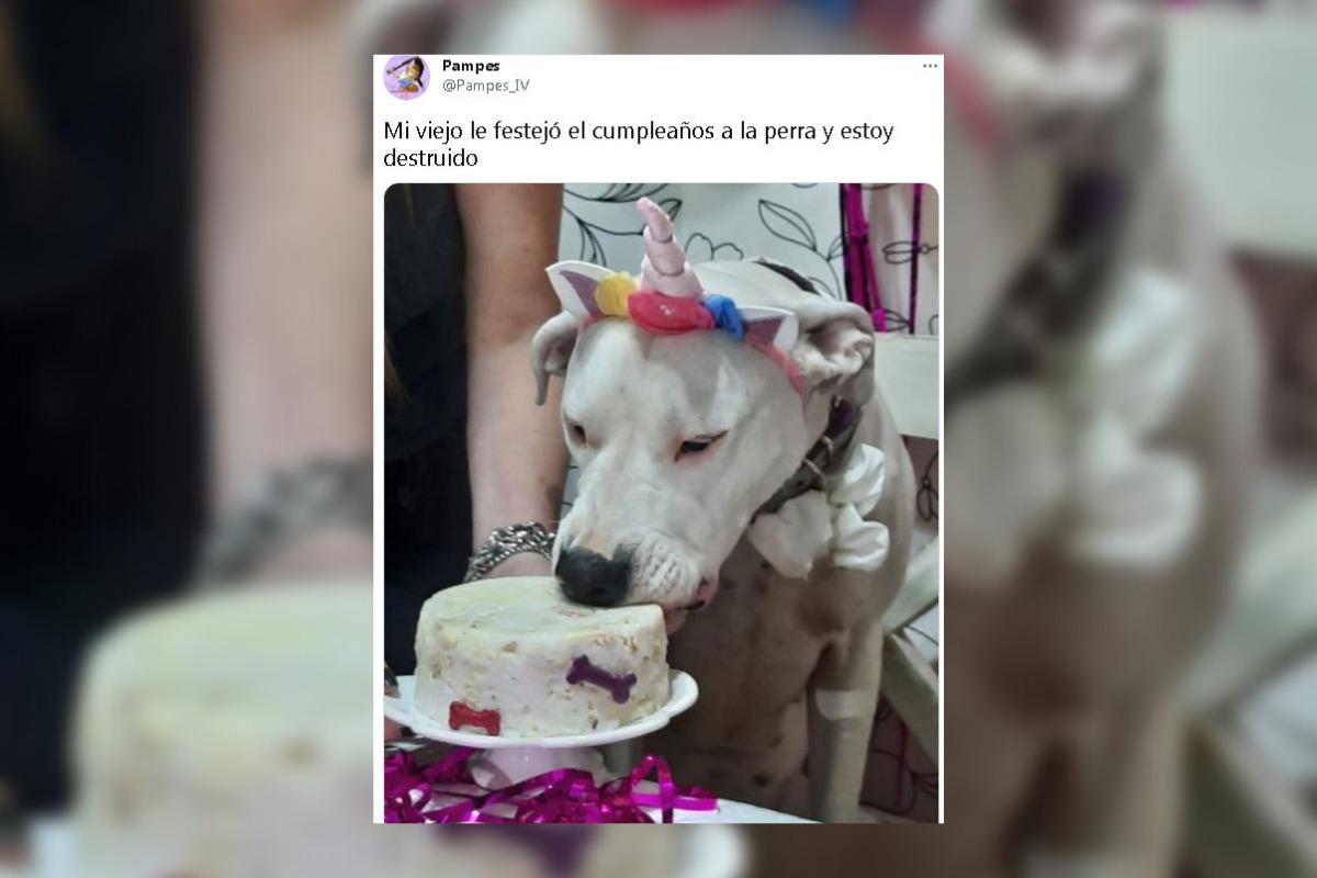 El hilo de mascotas festejando sus cumpleaños que se hizo viral en Twitter