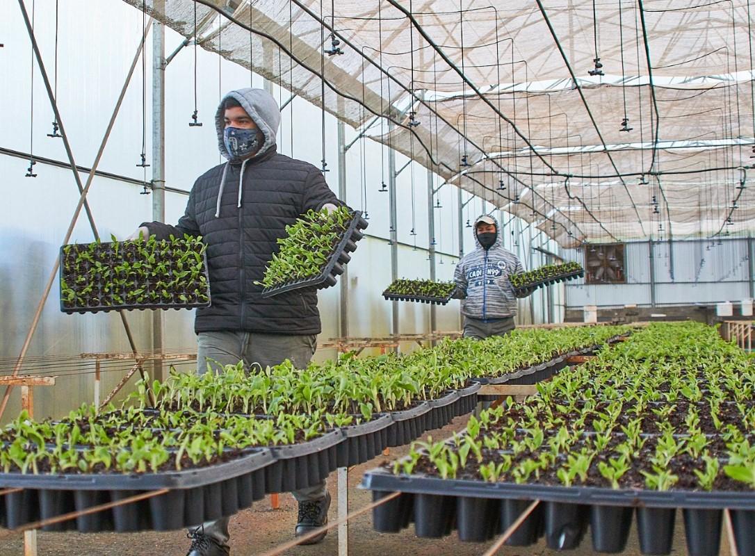 Misiones está próxima a inaugurar una planta de elaboración y envasado de frutas