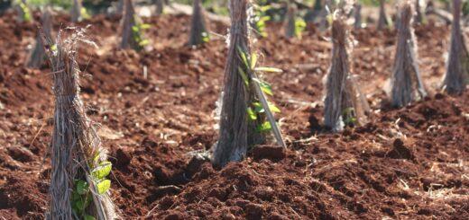 INYM: El Ministerio de Agricultura de la Nación confirmó la Resolución 170