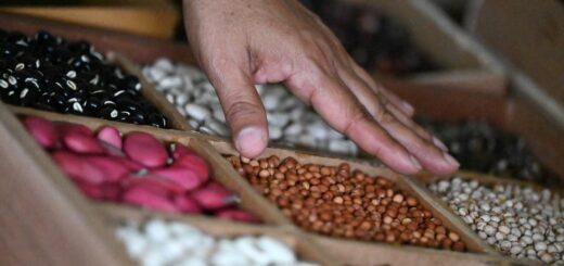 proyecto de conserva de semillas