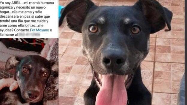 Tiene cáncer terminal y quiere dar en adopción a su perra