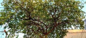 """Arbolado urbano: la """"molestia"""" del árbol en la ciudad"""