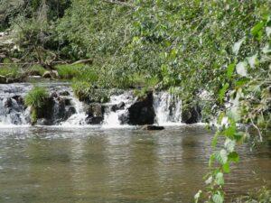 """Arauco suma más de 8 mil hectáreas, con su Reserva """"Valle de la Alegría"""" en San Pedro, al sistema de áreas naturales protegidas de Misiones"""