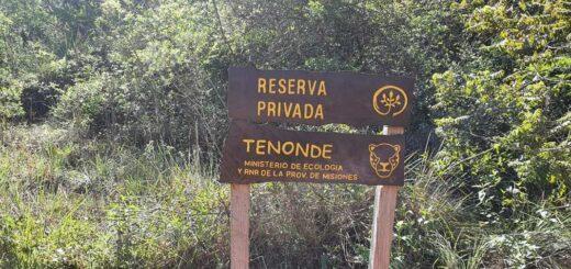Misiones | Conservación: donarán a la Provincia la reserva natural Tenondé, lindante al Parque Provincial Teyu Cuaré