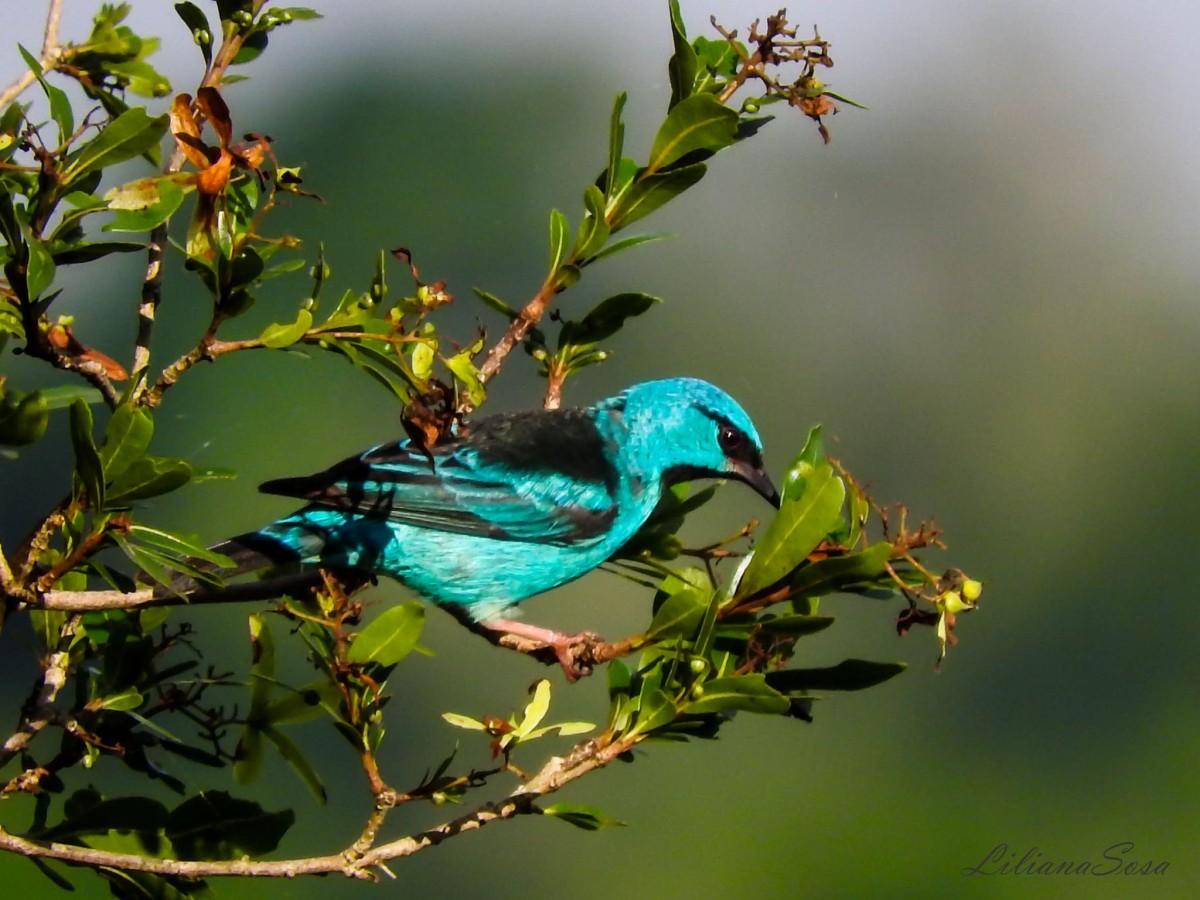 Hoy es el Día Nacional del Ave: en Misiones habita el 50% de las especies de aves argentinas
