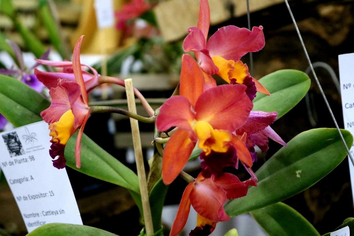 30° Fiesta Nacional de la Orquídea y 37° Fiesta Provincial de la Flor